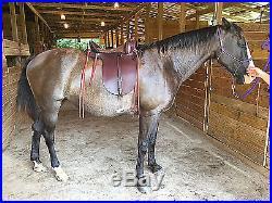 Amish Plantation Gaited Saddle Field Trial Endurance Trail, Wide Tree, 22 lb